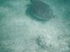 Loggerhead turtle. Akumal, Mexico. 19 November 2011. Taken with Polaroid waterproof disposable cameras.